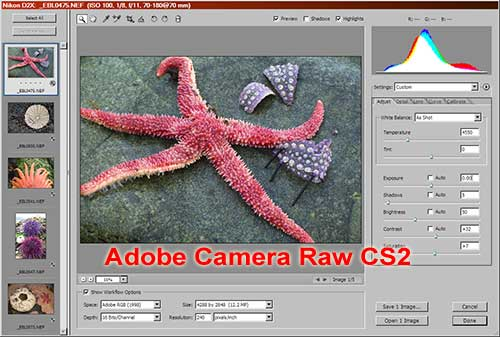 Adobe Camera Raw 3.1 for Photoshop CS2 and Elements 3.0