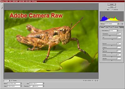 The Adobe Camera Raw plugin