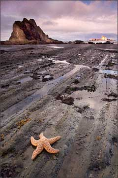 Foreground sea star on the Olympic coast