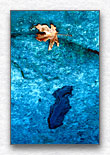 Still LIfe with Leaf and Puddle