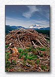 Two Mountains, Mt. Rainier and Clearcut